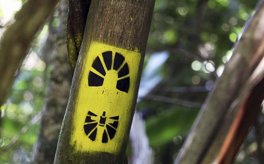 Le Parc de Tijuca (La forêt de Tijuca)