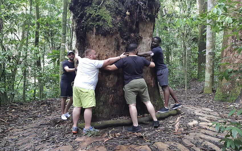 Excursion dans la forêt de Tijuca