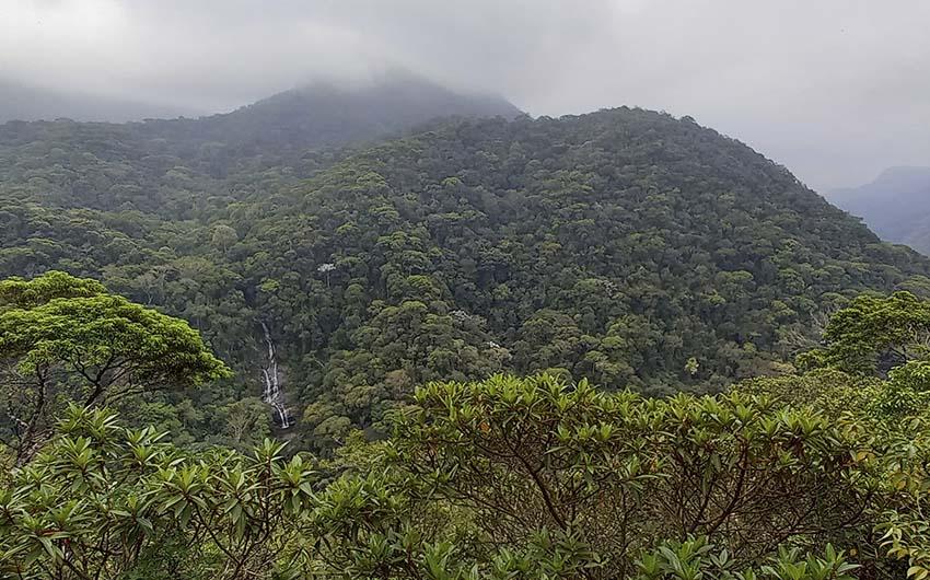 Pico da Mirim & Pico da Tijuca (Forêt de Tijuca)