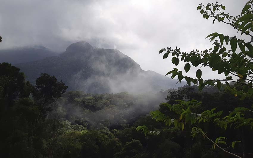 Randonnée Paineiras x Corcovado (Forêt de Tijuca)