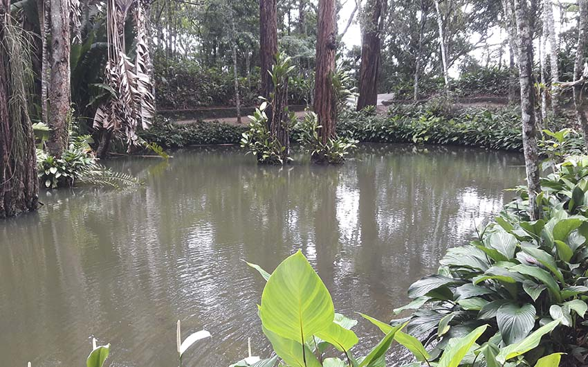 Promenade dans la forêt de Tijuca (PNT A)