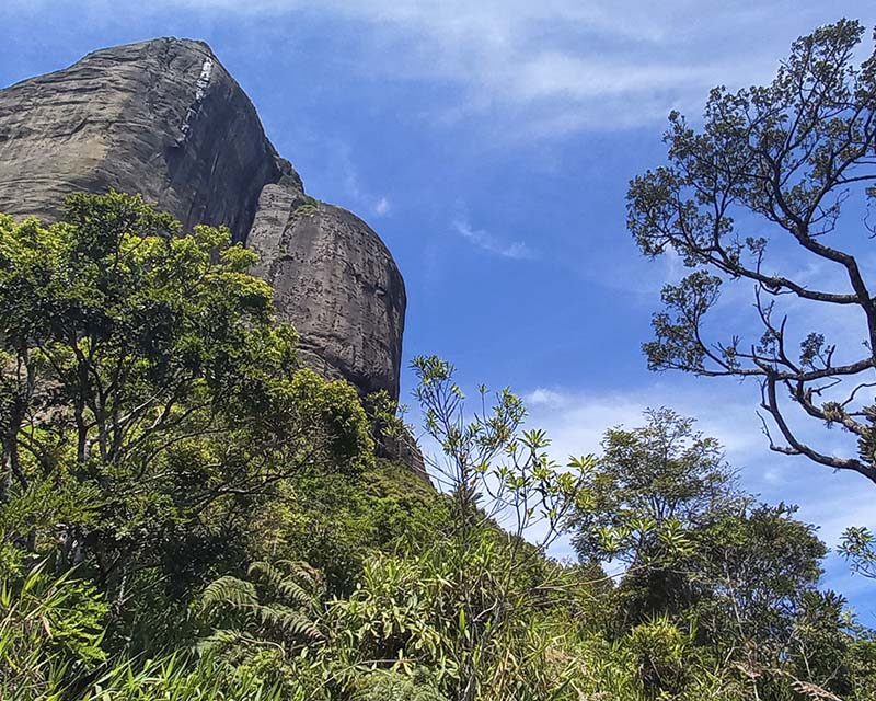 Combined Botanical Garden + Parque Lage